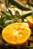 Olive branches with orange Royalty Free Stock Photos