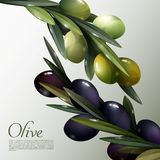 Olive Branches Poster abstracta Foto de archivo