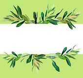 Olive branches template on green. Watercolor olive branches template on green background. Hand drawn watercolor illustration. Design for covers, packaging royalty free illustration