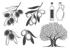 Olive branches, tree and oil Stock Image