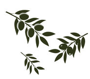 Olive Branches Vector Stock Images