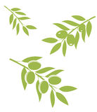 Olive Branches Vector Royalty Free Stock Photo