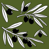 Olive branches. Vector Illustration set of olive tree branches with fruits royalty free illustration