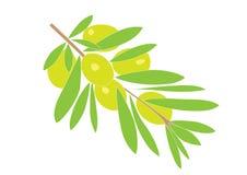 Olive brunch. Illustration of olive brunch, isolated on white Stock Photos
