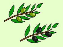 Olive brunch. Two brunches with green and black olives Royalty Free Stock Photo