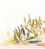 Olive brunch. Royalty Free Stock Photos