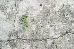 Olive on concrete Royalty Free Stock Photo