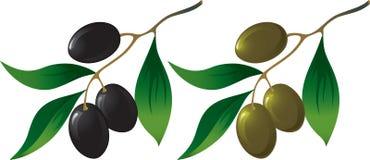 olive de branchement illustration de vecteur