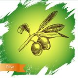 Olive di schizzo dell'illustrazione di vettore Fotografie Stock