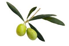 Olive di verdi Immagine Stock Libera da Diritti