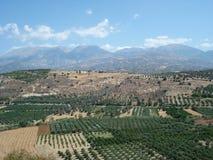olive dungar Royaltyfri Foto