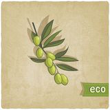 Olive eco background Stock Photography