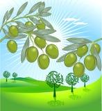 Olive et frais olives illustration libre de droits