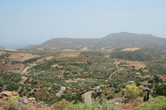 Olive fält i Crete Royaltyfria Bilder