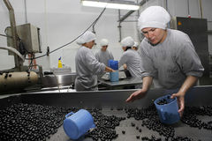 Olive factory. Unidentified workers make the separation process at olive factory on October 16,2010 in Akhisar,Turkey Royalty Free Stock Photo