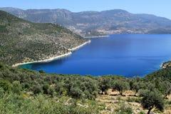 Olive farm Stock Image