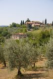Olive farm in Tuscany Royalty Free Stock Images