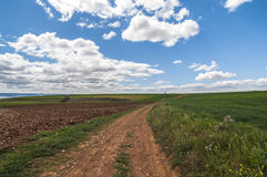 Olive field, Greeny landscape agaisnt blue sky and sun, spanish Royalty Free Stock Photos