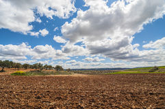 Olive field, Greeny landscape agaisnt blue sky and sun, spanish Royalty Free Stock Photography