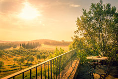 Olive field in Tuscany Stock Images