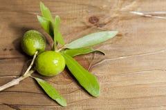 Olive filial Royaltyfri Foto