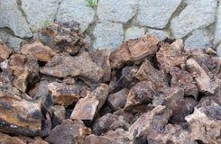 Olive firewood closeup Stock Photos