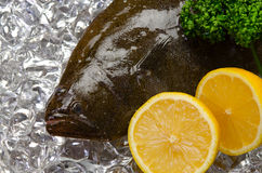 Olive flounder Royalty Free Stock Photos