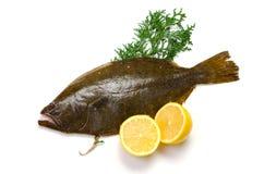 Olive flounder Stock Image
