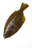 Olive flounder Stock Photography