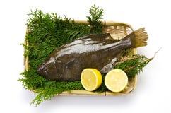 Olive flounder Stock Images