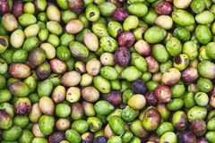 Olive fresche Immagini Stock