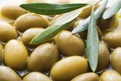 Olive fruit Stock Photos