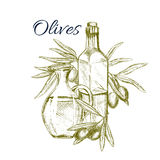 Olive fruit and oil sketch poster for food design Stock Photos