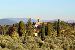 Olive garden in italy. Stock Photos