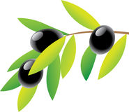 olive gałęziasta Zdjęcia Royalty Free