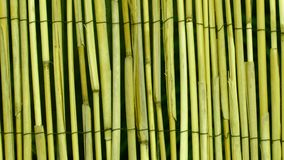 Olive Green Bamboo Wood Texture Background. Colorful olive green bamboo wood texture wallpaper background. It may be of interest to you that this image is 16:9 Royalty Free Stock Photo