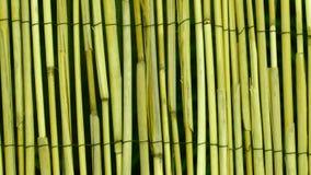 Olive Green Bamboo Wood Texture bakgrund Royaltyfri Foto