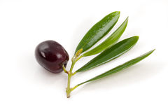 Olive and green leaves (clipping path) Stock Photos