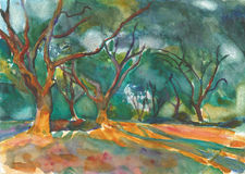 Olive Grove illustration stock