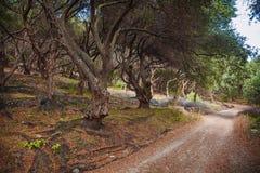 Olive Grove Imagen de archivo libre de regalías