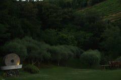 Olive Grove Fotografía de archivo libre de regalías