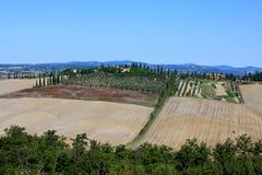 Olive Grove Landscape de Toscana Imagen de archivo libre de regalías