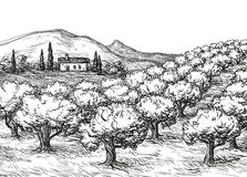 Olive grove landscape vector illustration
