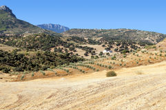 Olive grove in the mountains Stock Photo