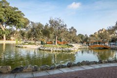 Olive Grove Park & x28;or El Olivar Forest& x29; in San Isidro district - Lima, Peru Stock Photo