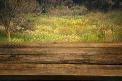 Olive grove with wood table Stock Image