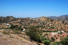 Olive groves, Andalusia, Spain. Olive groves and fincas in the mountains, Between Antequera and Alora, Costa del Sol, Malaga Province, Andalusia, Spain, Western Royalty Free Stock Photos