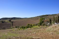 Olive groves and arable fields of Andalucia. Extensive olive groves and cultivated fields with mountain scenery under a blue sky in andalusia spain Royalty Free Stock Photo