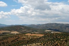 Olive groves, Axarquia, Spain. Royalty Free Stock Images