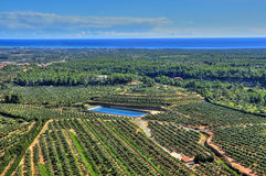 Olive groves in Costa Daurada, Spain Royalty Free Stock Image